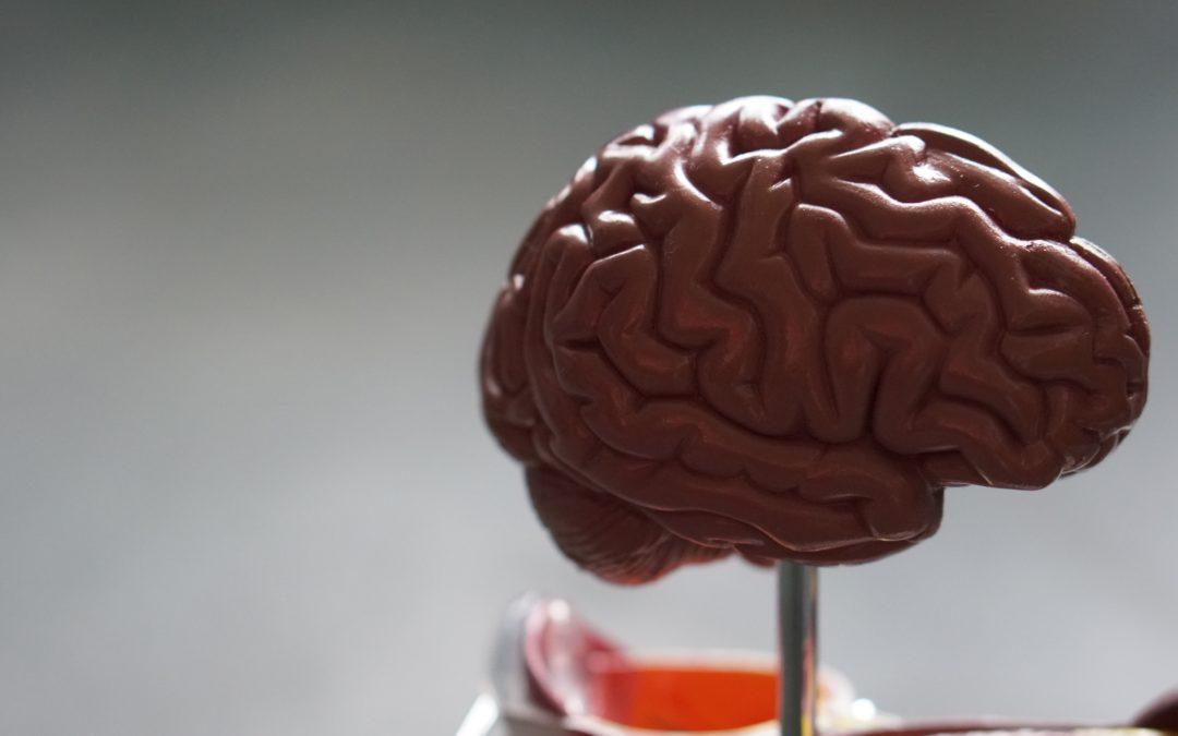 Algunas claves para retrasar el envejecimiento cerebral