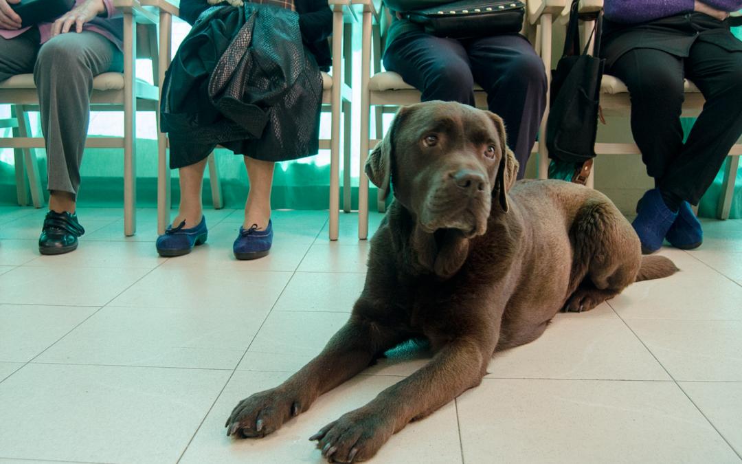 Terapia con perros en centros de día de Oviedo